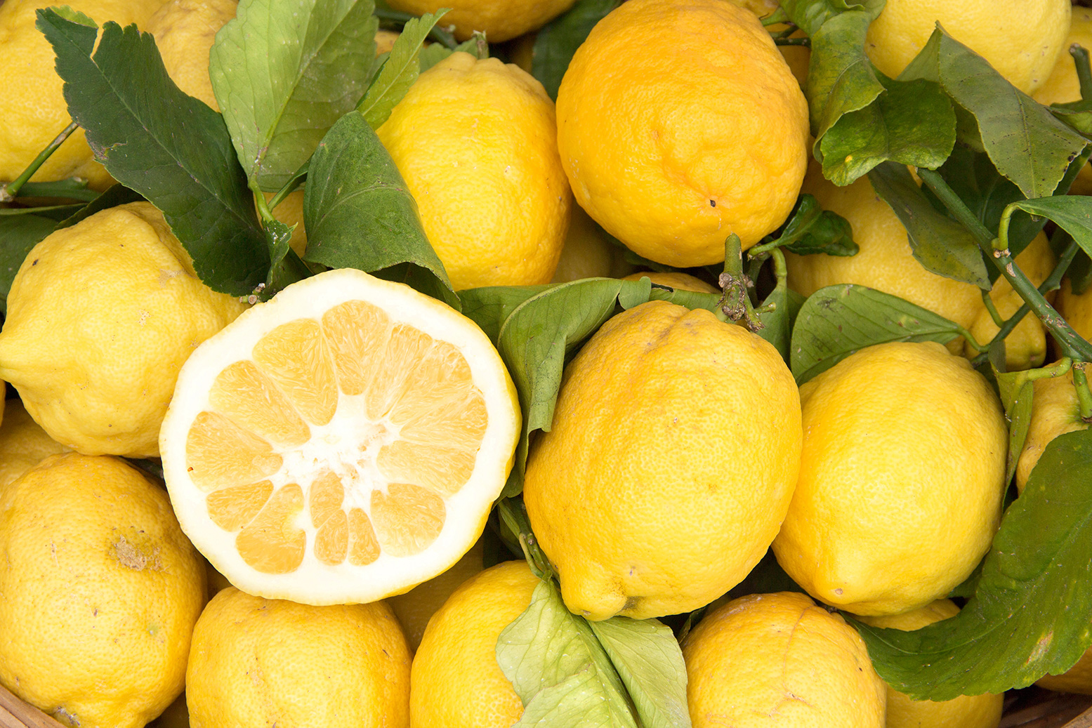 bg_01_lemon-
